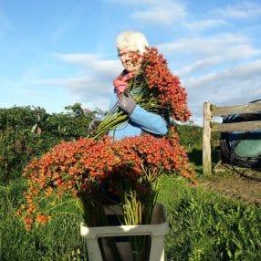 summerflowers-kweker