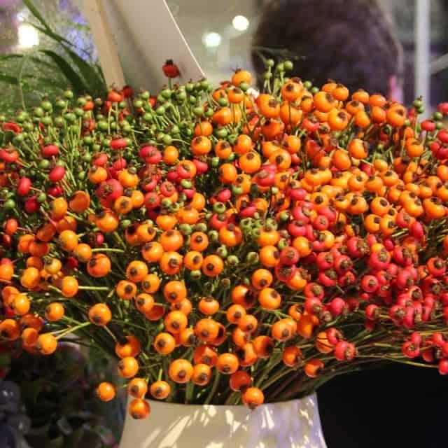 summerflowers-soorten-Rozenbottel